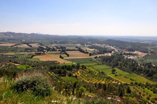Os campos de oliveiras e videiras.