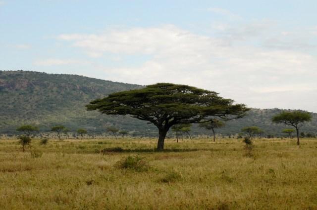 A paisagem clássica da Savana Africana.