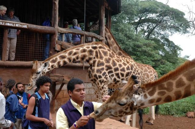 A Torre de Observação do Giraffe Center