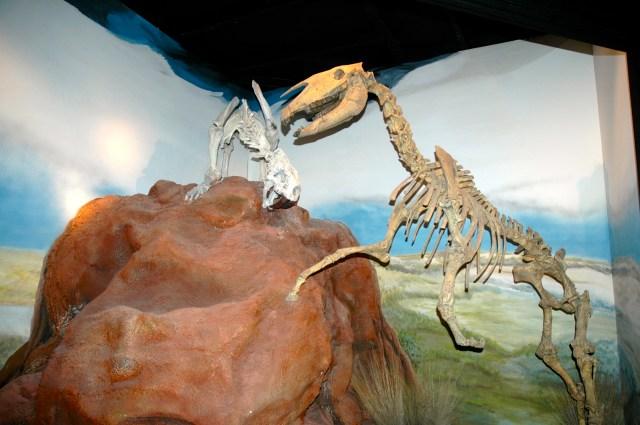 Fósseis de dinossauros em Trelew