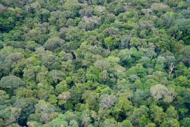 A Floresta Amazônica.
