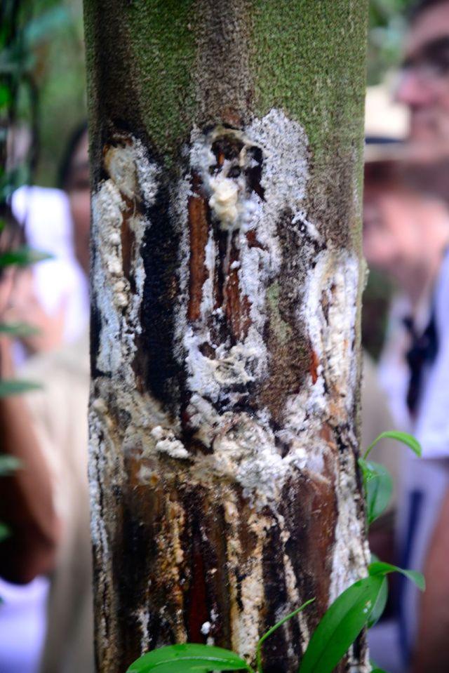Os produtos da Amazônia são utilizados pela indústria de medicamentos, de perfumes, etc.