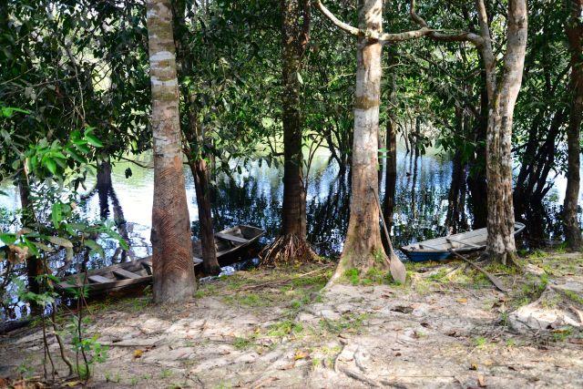 A seringueira era uma exclusividade da Amazônia.