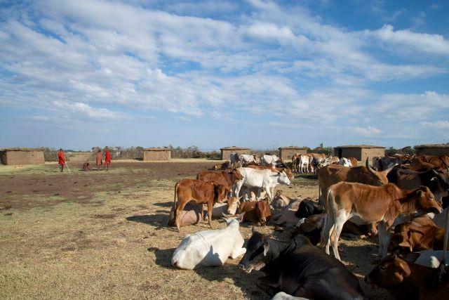 O interior de uma aldeia Masai.
