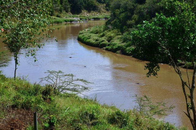 O Rio Mara, cheio de hipopótamos e crocodilos.
