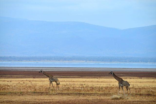 O Lago Manyara.
