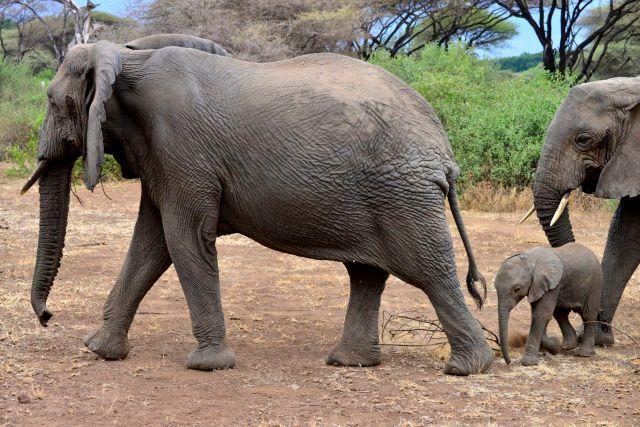 A proximidade com os elefantes deixou o clima do safari um pouco tenso.