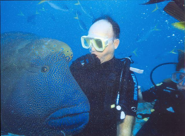 Mergulho na Grande Barreira de Corais - Austrália.