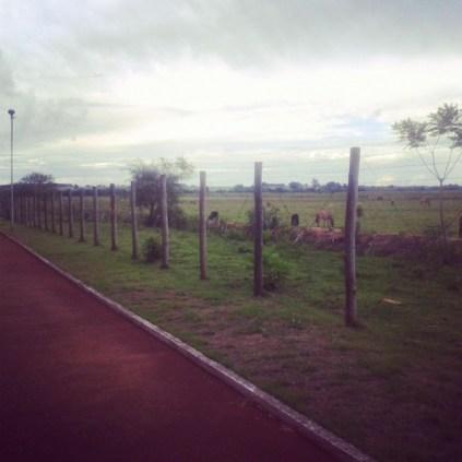 Bosque da Paz. Uma pista de caminhada ao lado de um sítio.