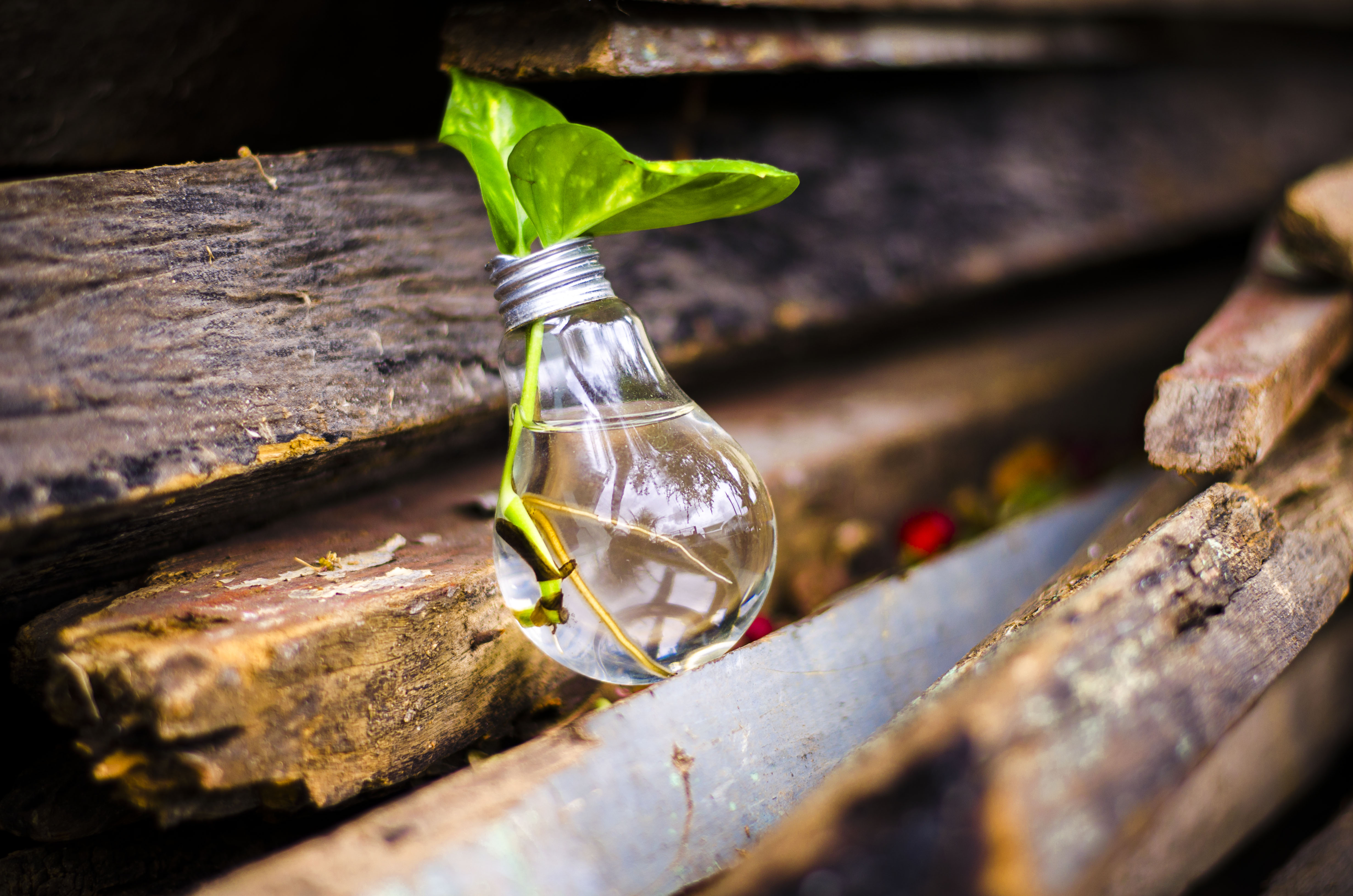 A photo of a plant sprouting from light bulb from Pexels