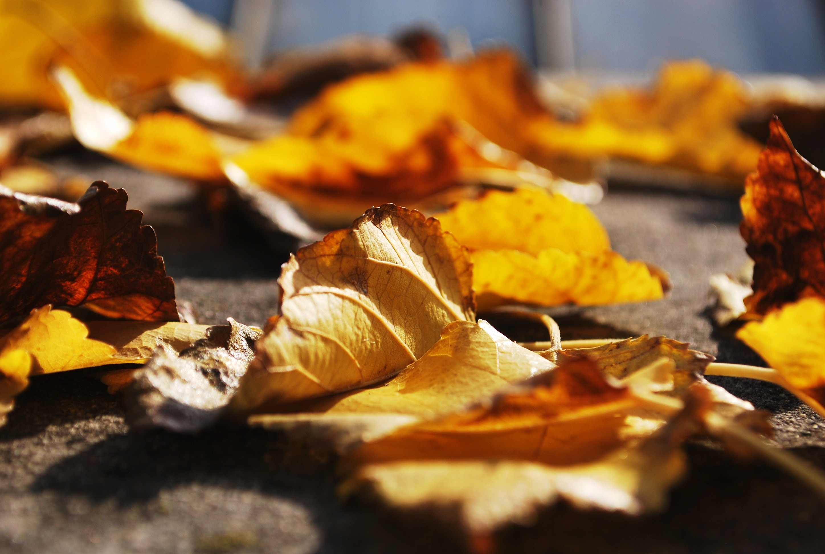 A picture of orange leaves by petradr on Unsplash