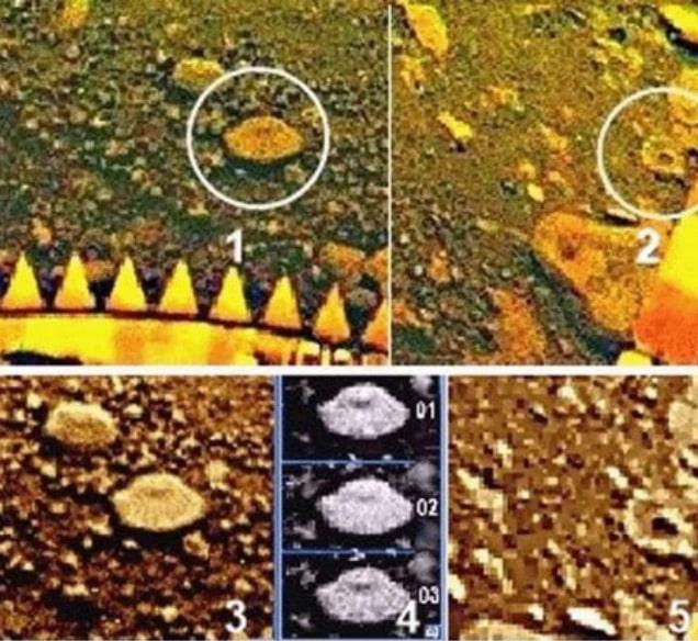 Есть ли жизнь на Венере? Российские ученые нашли на Венере «грибы», «скорпиона» и «ящерицу» 6