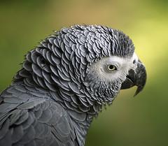 Попугаи рассуждают сложным методом исключения 2