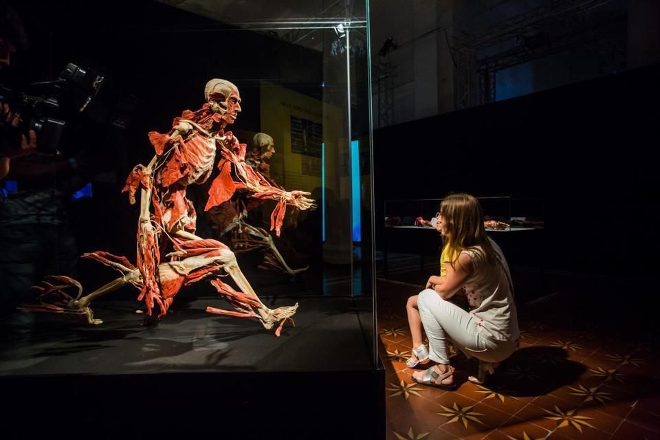 Выставка пластинированных человеческих тел в Киеве 1