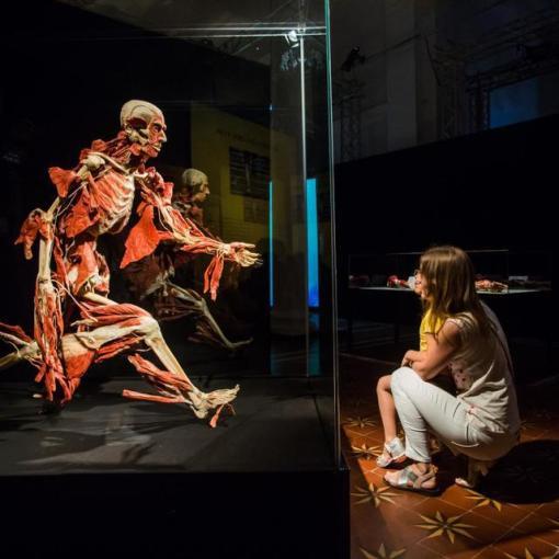 Выставка пластинированных человеческих тел в Киеве 16