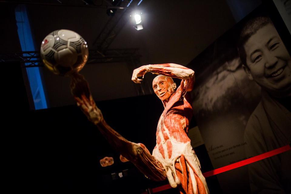 Выставка пластинированных человеческих тел в Киеве 4