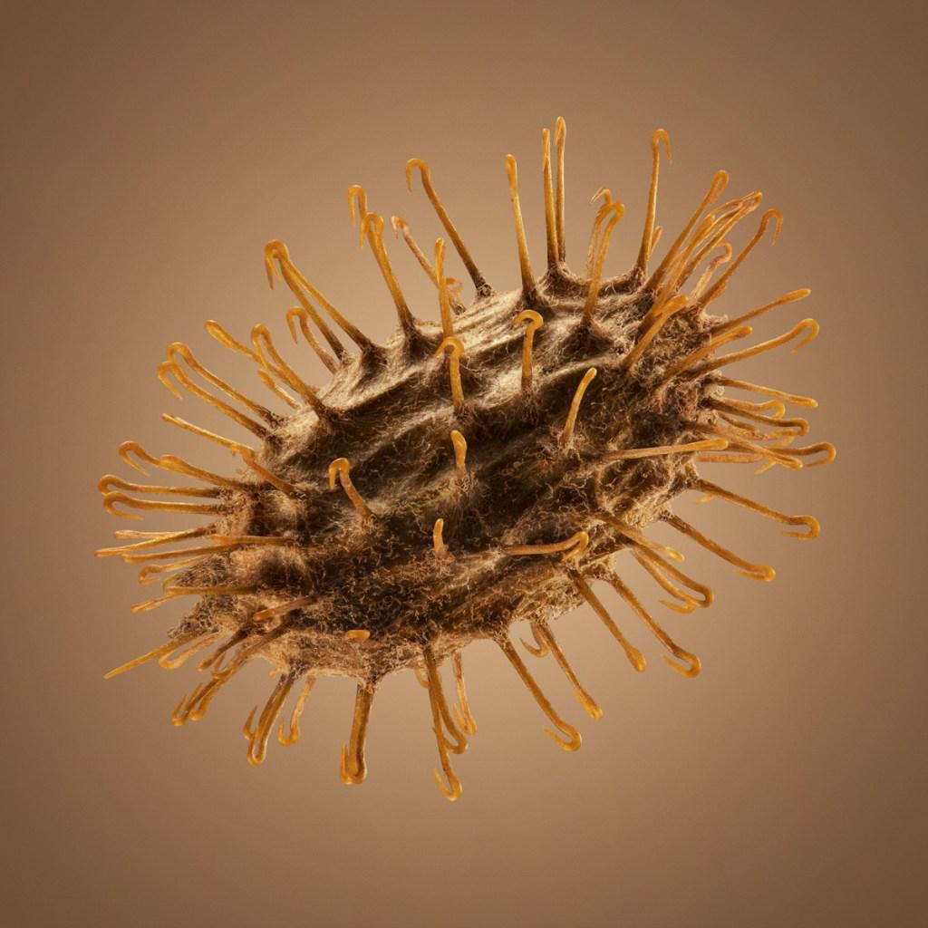 Удивительные детали экзотических семян под микроскопом 4