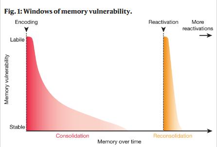 Редактирование памяти: от научной фантастики до клинической практики 1