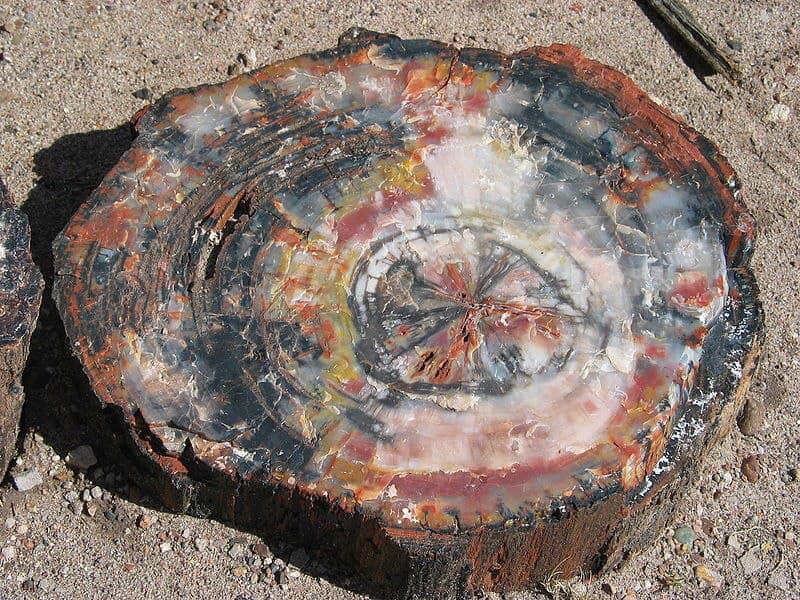 Окаменелые деревья 3