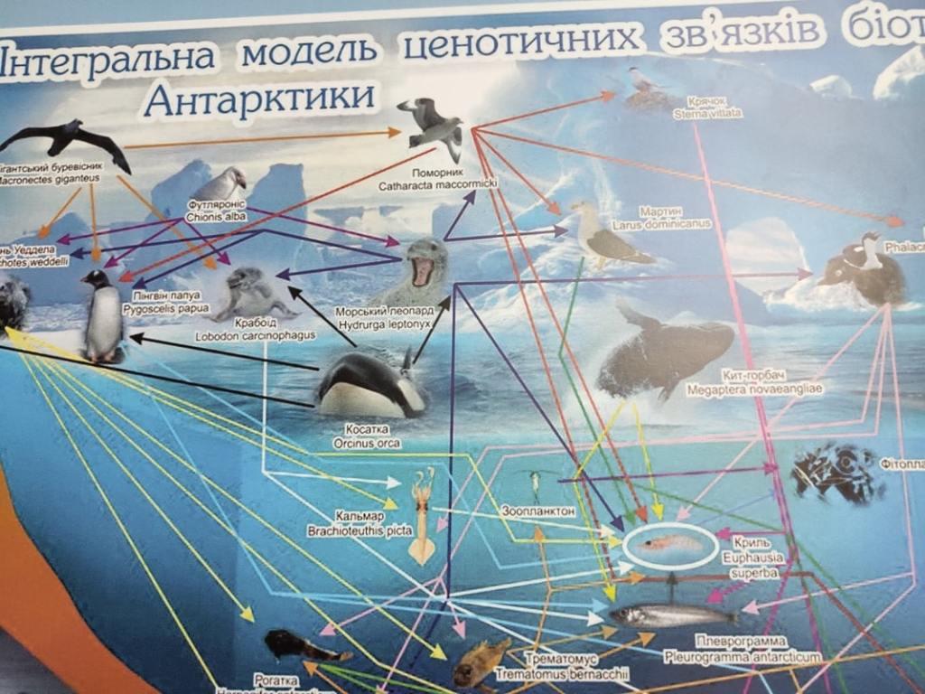 Начальник Антарктической экспедиции Юрий Отруба: «Едем обслуживать приборы» 13
