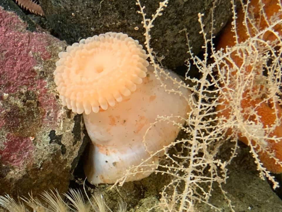 Украинские исследователи нашли в Антарктиде уникальных морских животных 7