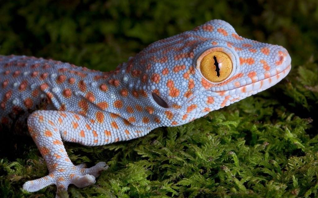 Физика в мире животного: лапа геккона 2