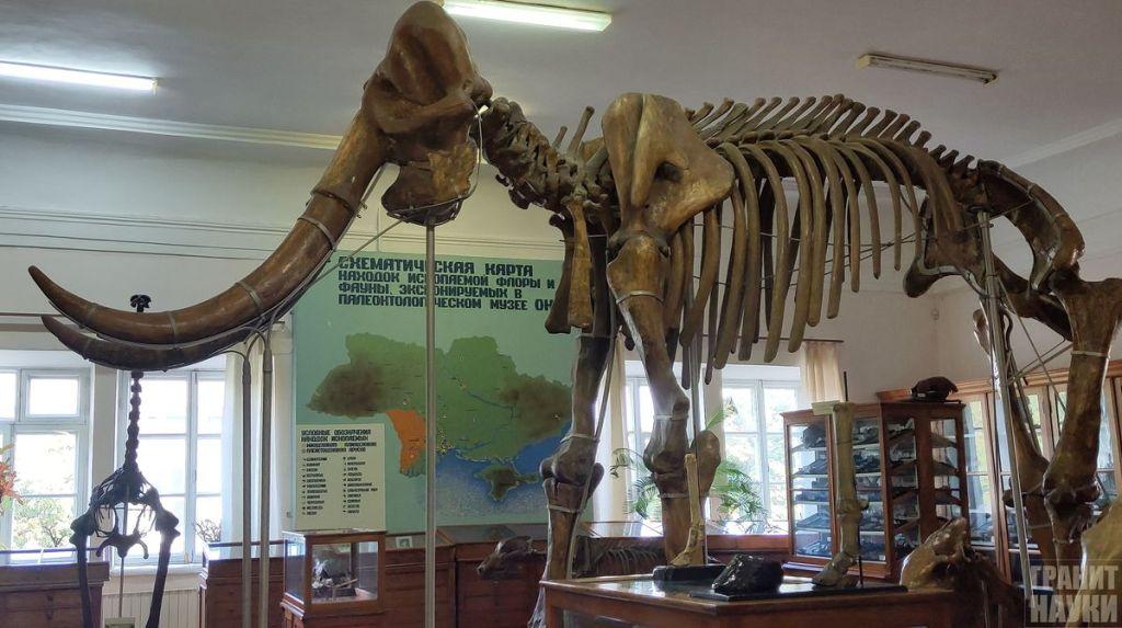 Палеонтологическая гордость Одессы. Фоторепортаж 44