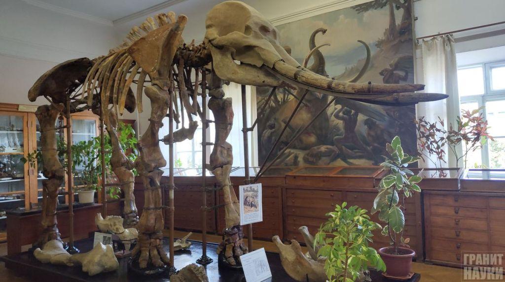 Палеонтологическая гордость Одессы. Фоторепортаж 35