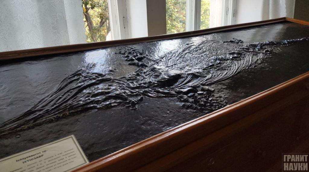 Палеонтологическая гордость Одессы. Фоторепортаж 39