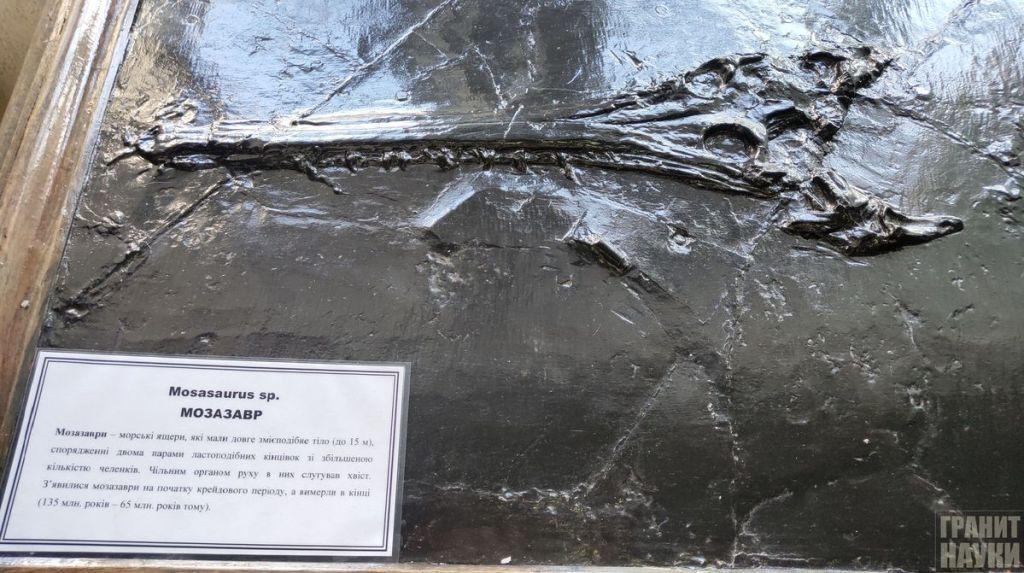 Палеонтологическая гордость Одессы. Фоторепортаж 40
