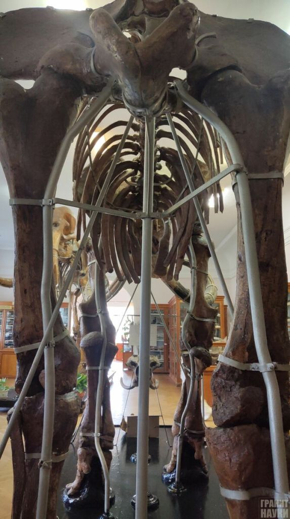 Палеонтологическая гордость Одессы. Фоторепортаж 50
