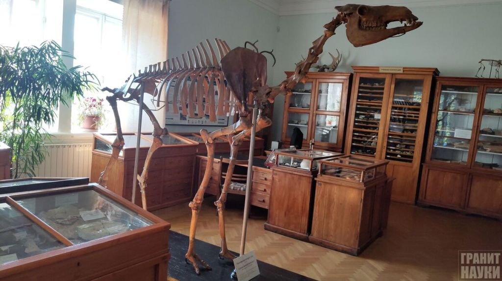 Палеонтологическая гордость Одессы. Фоторепортаж 24