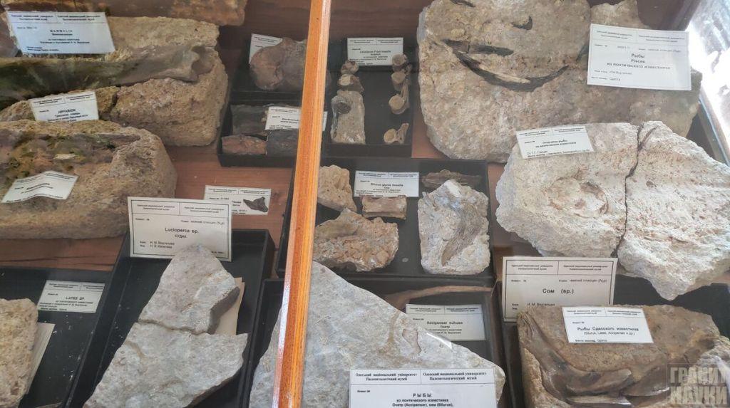 Палеонтологическая гордость Одессы. Фоторепортаж 25