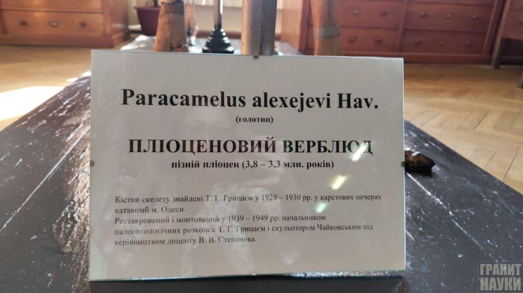 Палеонтологическая гордость Одессы. Фоторепортаж 26