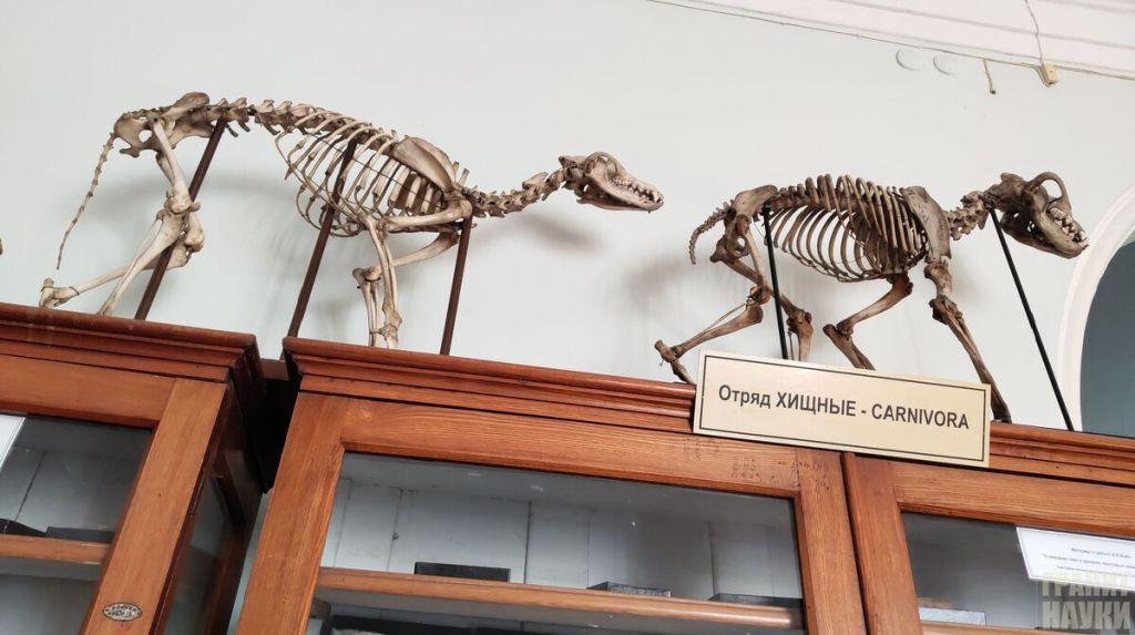 Палеонтологическая гордость Одессы. Фоторепортаж 18