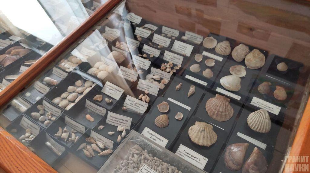 Палеонтологическая гордость Одессы. Фоторепортаж 11