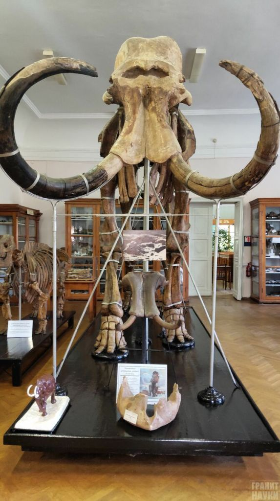 Палеонтологическая гордость Одессы. Фоторепортаж 52