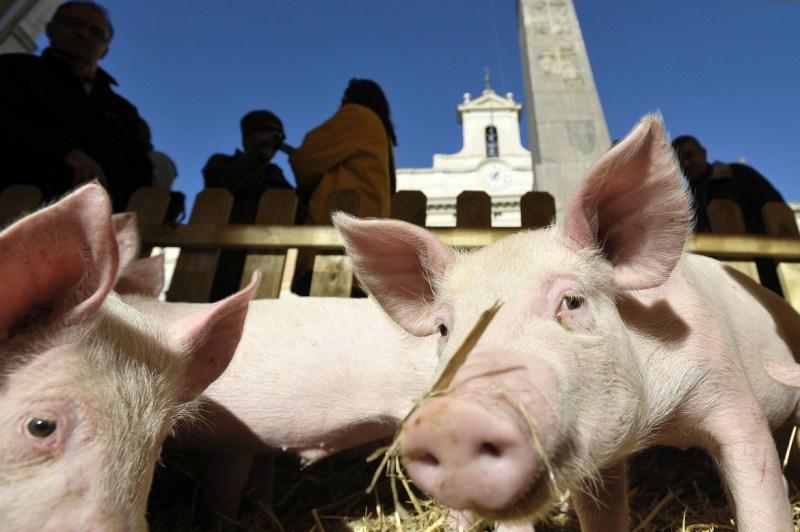 Appello dei giuristi: Italicum peggio del Porcellum, fermatevi