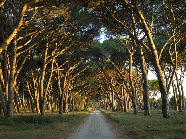 Piano integrato del parco Migliarino-San Rossore-Massaciuccoli: si investa ancora sulla partecipazione