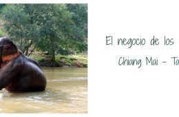 maltrato-elefantes-tailandia