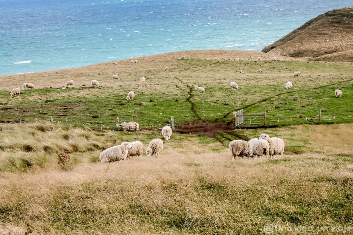 nueva-zelanda-dunedin-peninsula-otago-unaideaunviaje-12