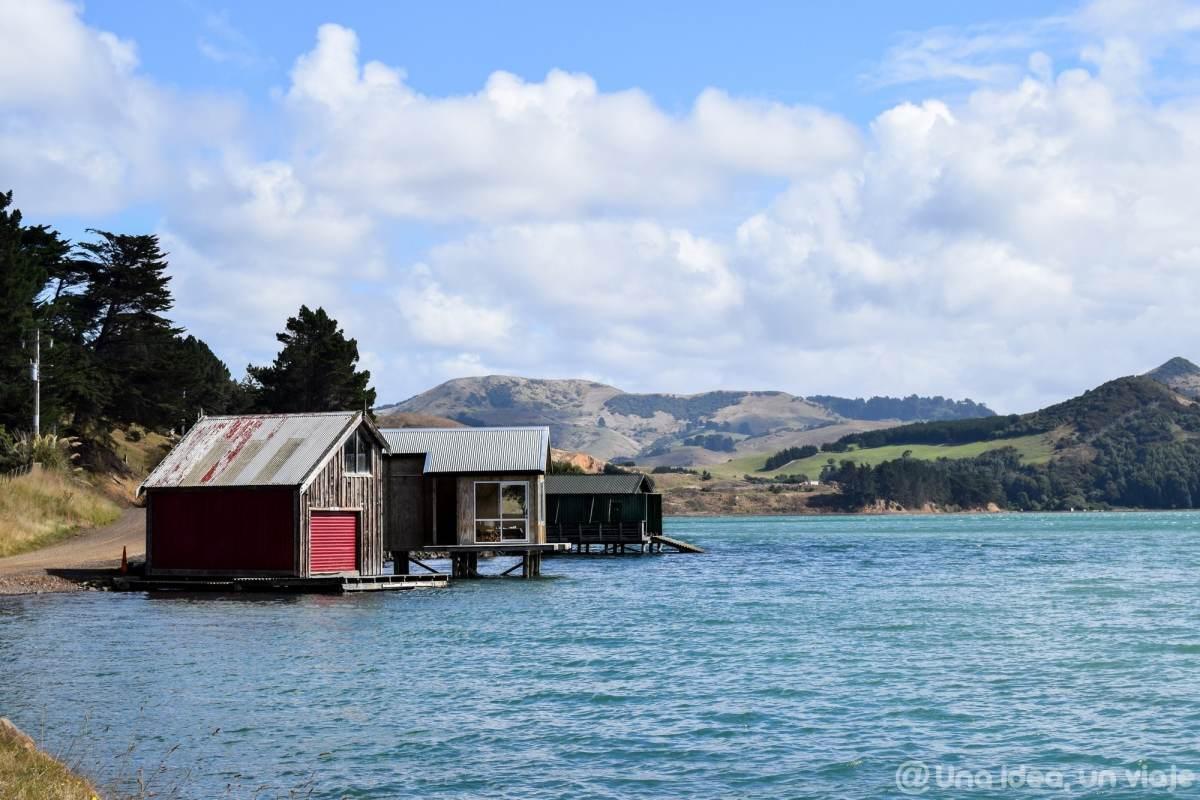 nueva-zelanda-dunedin-peninsula-otago-unaideaunviaje-17