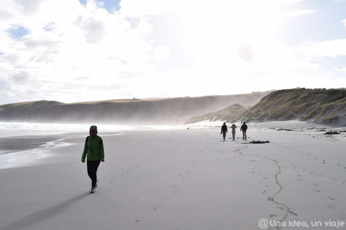 nueva-zelanda-dunedin-peninsula-otago-unaideaunviaje-20