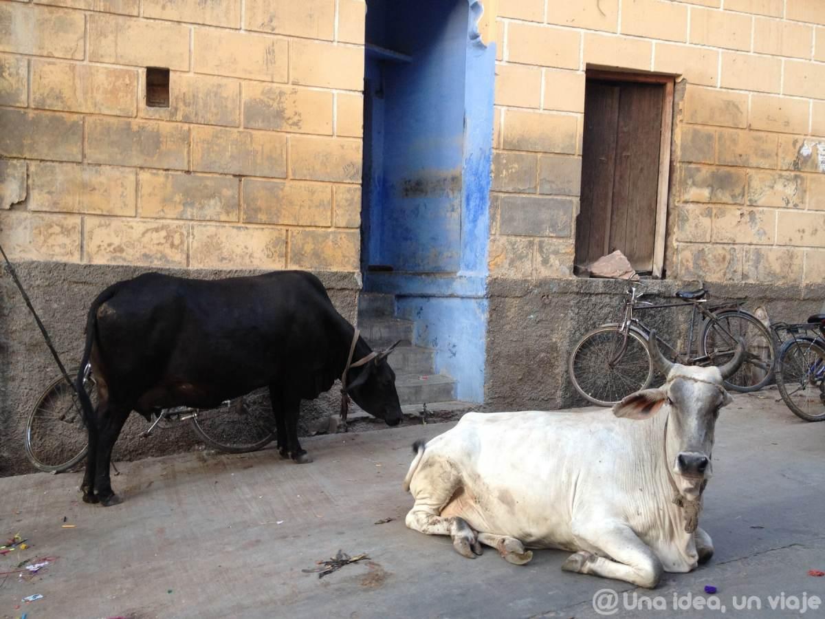india-rajastan-15-dias-jodhpur-visitar-unaideaunviaje-19