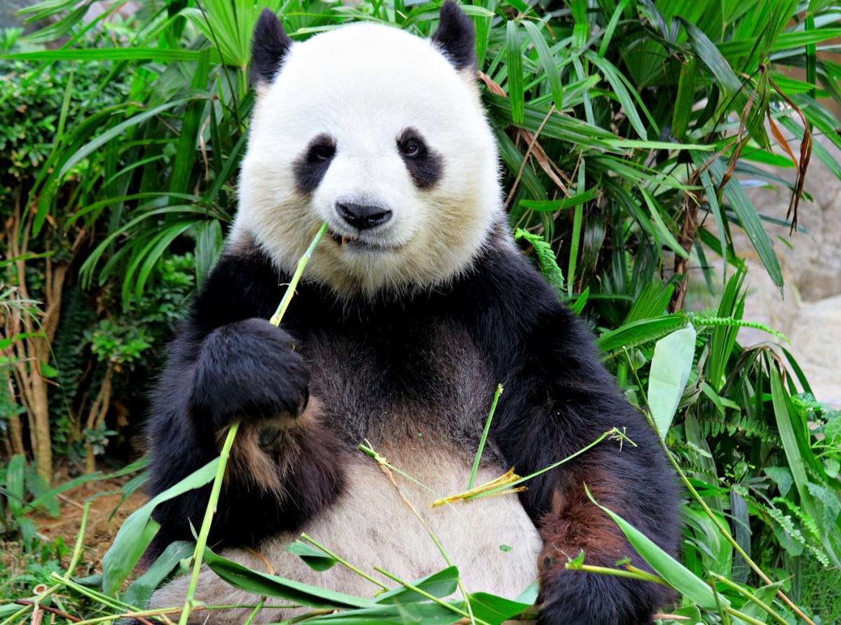 Consejos antes de tu primer viaje a China