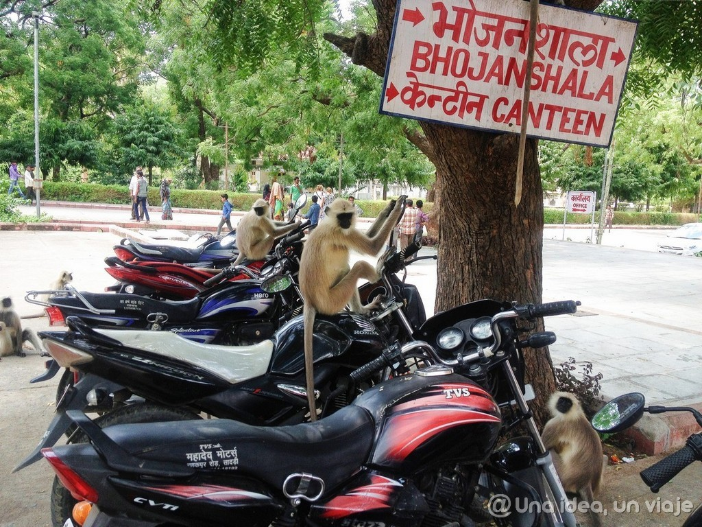 Guía de viaje por Rajastán: Udaipur