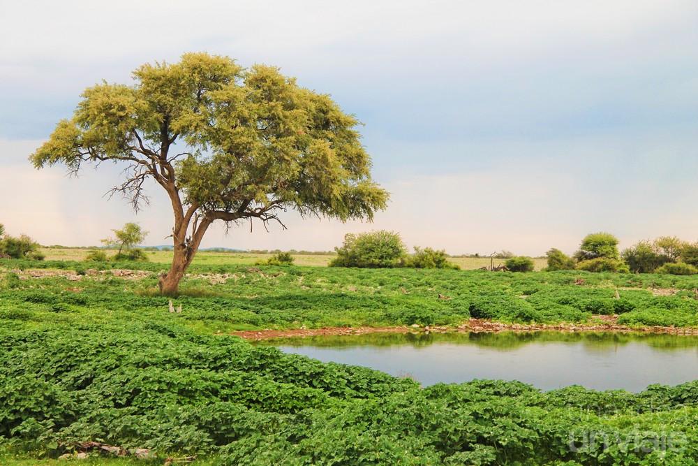 Water Hole Okaukuejo Etosha National Park