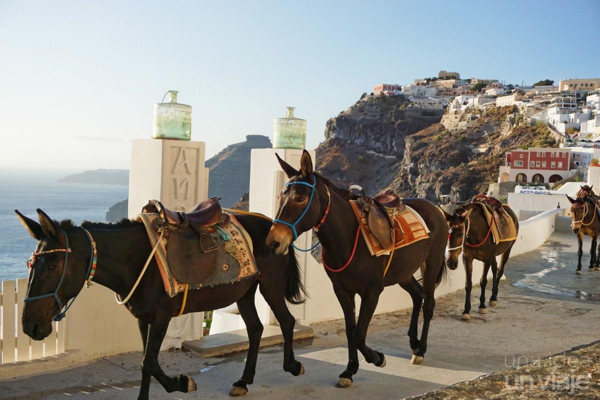 El negocio de los burros en Santorini