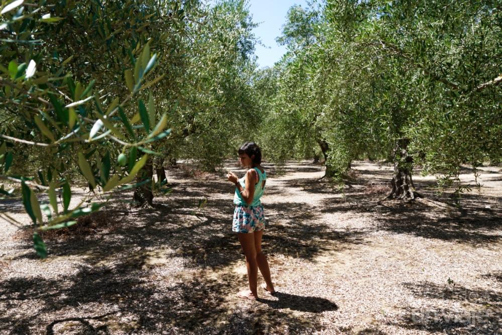 Zona de olivos cerca de Kalamata