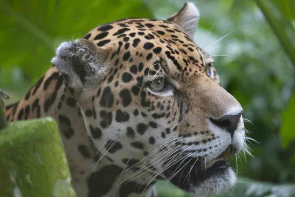 Animales en Amazonas de Perú